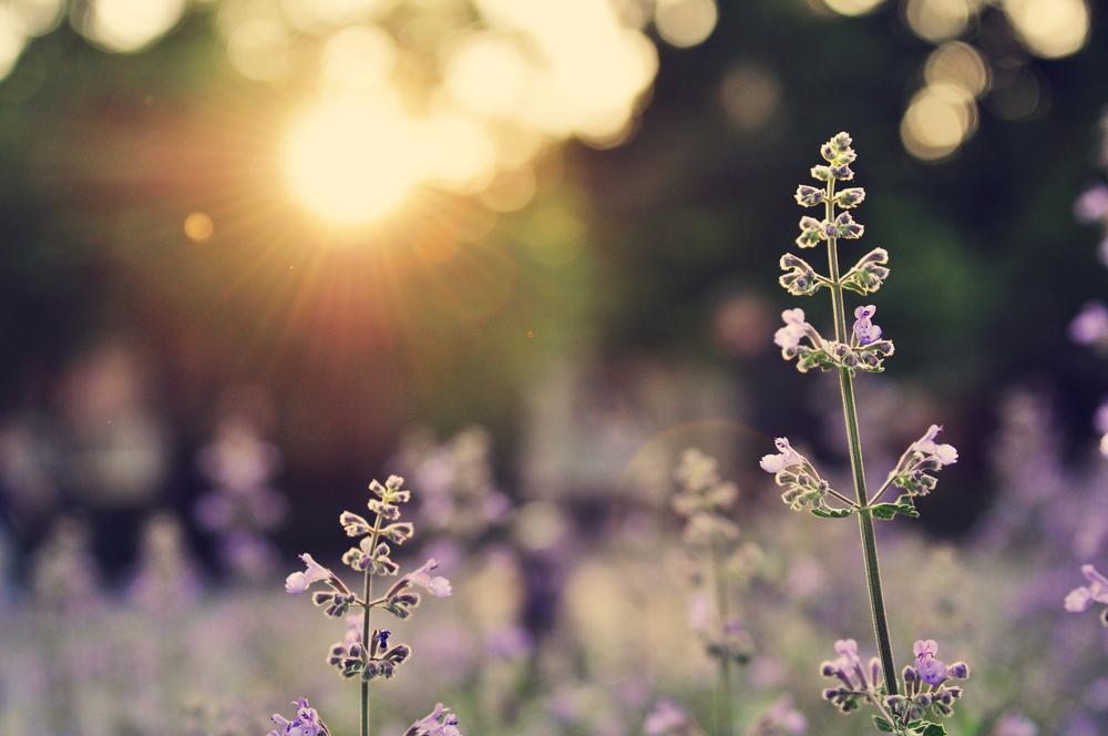 fleur petit